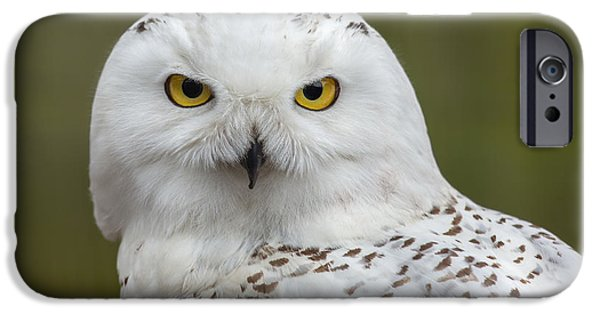 Snow iPhone Cases - Snowy Owl iPhone Case by Dale Kincaid