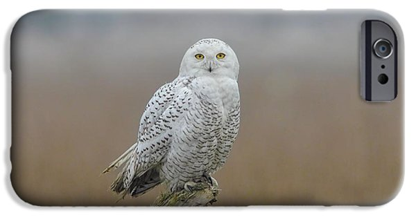 Flight Pyrography iPhone Cases - Snowy Owl  iPhone Case by Daniel Behm