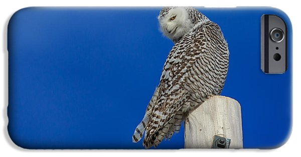 Snowy Photographs iPhone Cases - Snowy Owl iPhone Case by Everet Regal