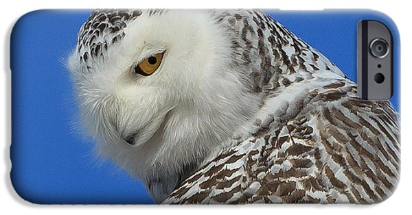 Snowy Photographs iPhone Cases - Snowy Owl Greeting Card iPhone Case by Everet Regal