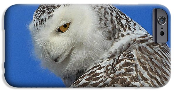 Snowy iPhone Cases - Snowy Owl Greeting Card iPhone Case by Everet Regal