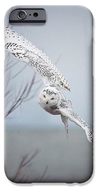 Winter iPhone Cases - Snowy Owl In Flight iPhone Case by Carrie Ann Grippo-Pike
