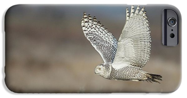 Snowy Pyrography iPhone Cases - Snowy Owl in flight iPhone Case by Daniel Behm