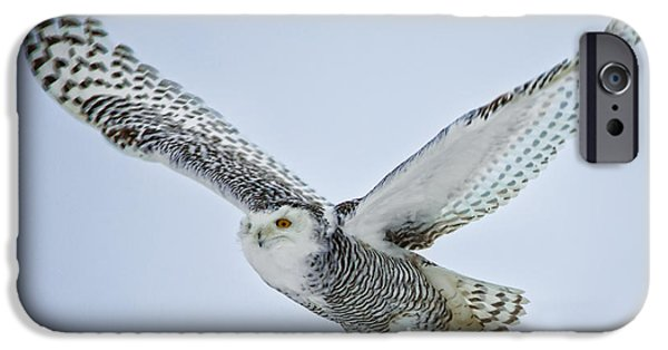 Snowy iPhone Cases - Snowy Owl in flight iPhone Case by Everet Regal