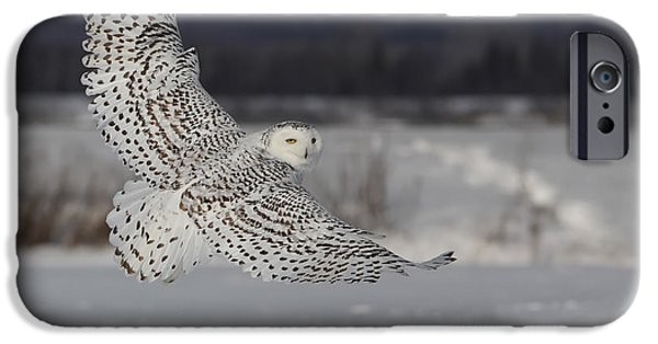 Mystic Art iPhone Cases - Snowy Owl in flight iPhone Case by Mircea Costina Photography