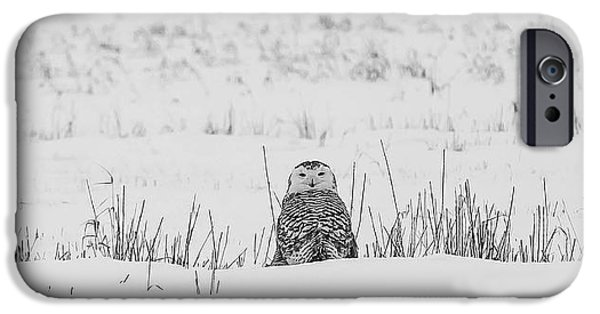 Snow iPhone Cases - Snowy Owl in Snowy Field iPhone Case by Carrie Ann Grippo-Pike