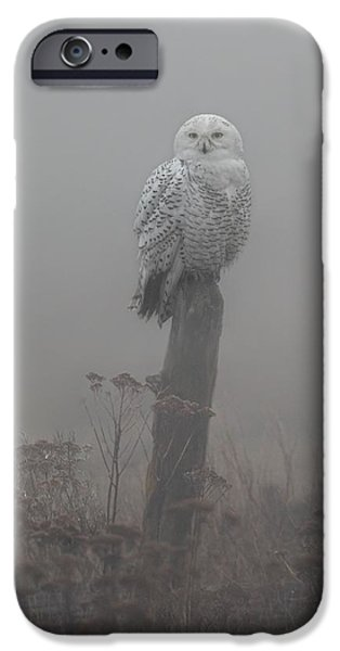 Snowy Pyrography iPhone Cases - Snowy Owl  in the Mist iPhone Case by Daniel Behm
