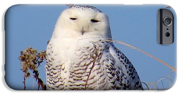 Sand Dunes Pyrography iPhone Cases - Snowy Owl iPhone Case by Mannington Creek Photography