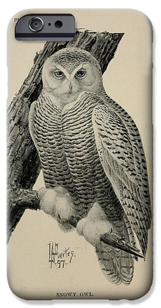 Snowy Drawings iPhone Cases - Snowy Owl iPhone Case by Louis Fuertes