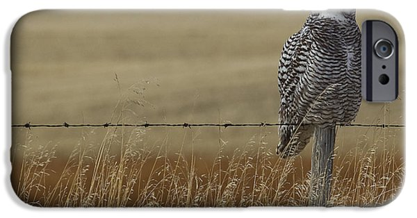 Snowy Day iPhone Cases - Snowy Owl Perched On Barbed Wire Fence iPhone Case by Robert Postma