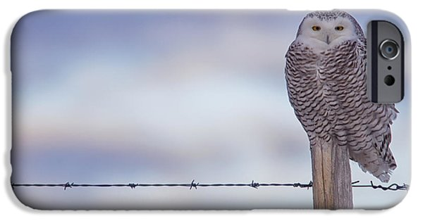 Snowy Day iPhone Cases - Snowy Owl Perched On Fence Post iPhone Case by Robert Postma