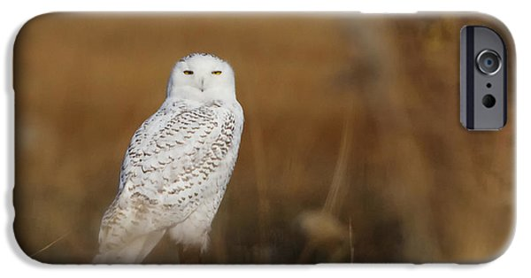 Snowy iPhone Cases - Snowy Owl Portrait iPhone Case by Stephanie McDowell