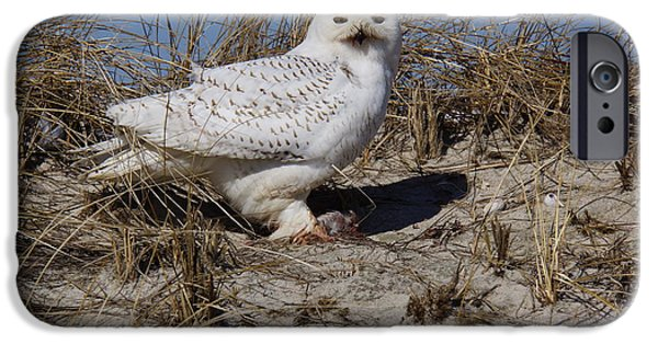 Cape Cod Pyrography iPhone Cases - Snowy owl iPhone Case by Rocky Crowe