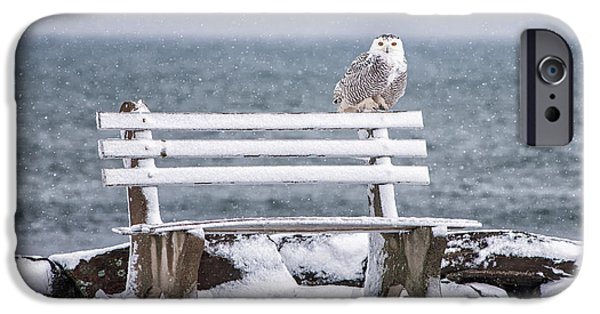 Snowy iPhone Cases - Snowy Owl Rye N H iPhone Case by Scott Thorp