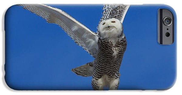 Flight iPhone Cases - Snowy Owl taking flight iPhone Case by Everet Regal