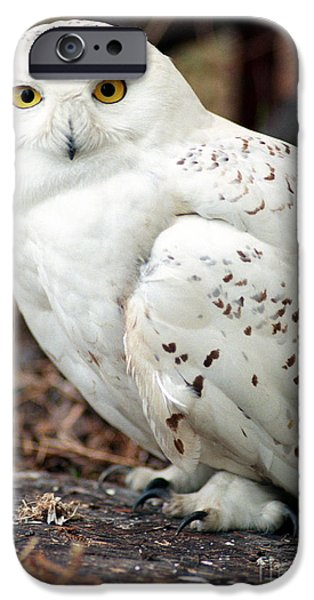 Snowy iPhone Cases - Snowy Owl iPhone Case by Terry Elniski