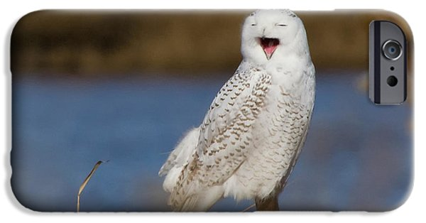 Snowy iPhone Cases - Snowy Owl Yawning iPhone Case by Stephanie McDowell