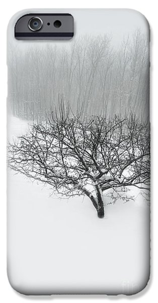 Snow iPhone Cases - Snowy Path iPhone Case by HD Connelly