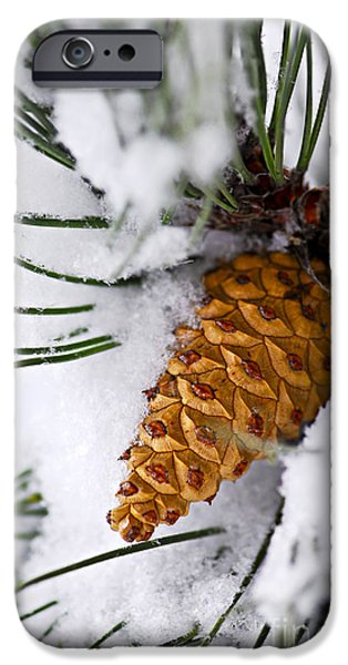 Winter iPhone Cases - Snowy pine cone iPhone Case by Elena Elisseeva