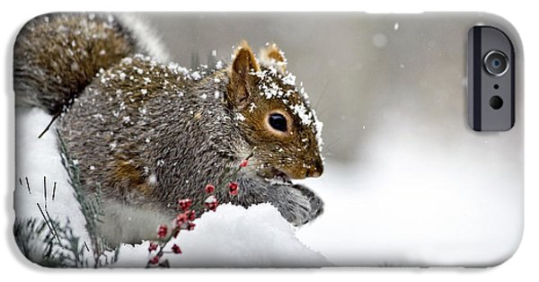Christmas Holiday Scenery iPhone Cases - Snowy Squirrel iPhone Case by Christina Rollo