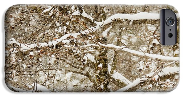 Winter Storm iPhone Cases - Snowy Tree iPhone Case by Tracy Salava