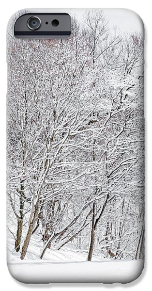 Frigid iPhone Cases - Snowy trees in winter park iPhone Case by Elena Elisseeva