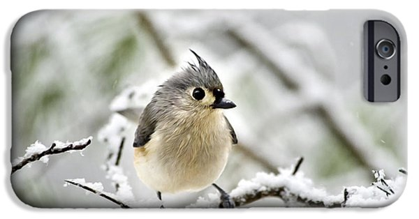 Titmouse iPhone Cases - Snowy Tufted Titmouse iPhone Case by Christina Rollo