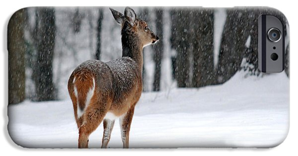 Christmas Holiday Scenery iPhone Cases - Snowy White-Tail iPhone Case by Christina Rollo