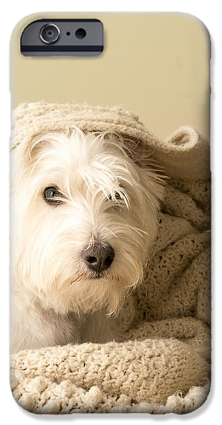 Cute Puppy iPhone Cases - Snuggle Dog iPhone Case by Edward Fielding