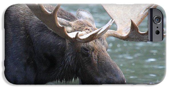 Moose In Water iPhone Cases - Soaked iPhone Case by Adam Jewell