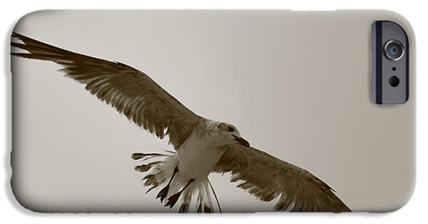 Sea Birds iPhone Cases - Soaring Gull iPhone Case by Andre Turner