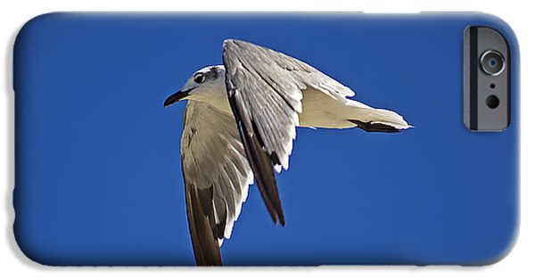Flying Seagull iPhone Cases - Soaring High iPhone Case by Kenneth Albin