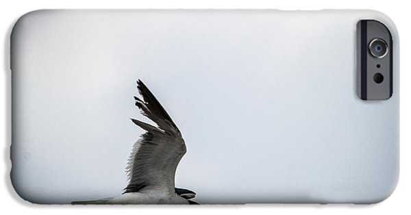 Flying Seagull iPhone Cases - Soaring into the Storm iPhone Case by Shelby  Young