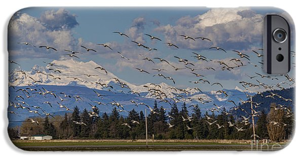 Snow iPhone Cases - Soaring Skagit Snow Geese iPhone Case by Mike Reid