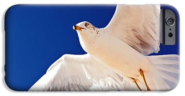 Flying Seagull iPhone Cases - Soaring iPhone Case by Tim Wilson