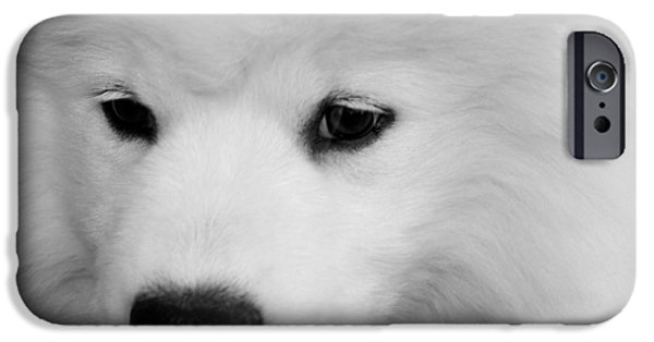 Puppy Love Framed Prints iPhone Cases - Soft And Overwhelming Beauty.... iPhone Case by Fiona Kennard