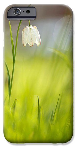 Meleagris iPhone Cases - Soft Awakenings - White Chess Flower iPhone Case by Roeselien Raimond