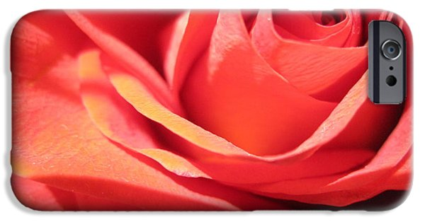 Flora Drawings iPhone Cases - Soft Coral Rose  iPhone Case by Tara  Shalton