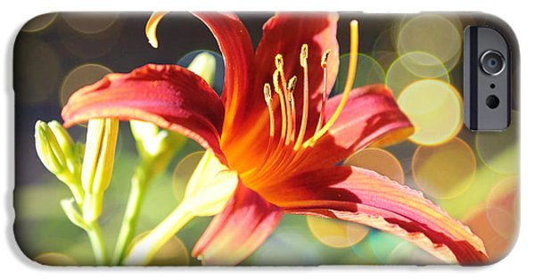 Sunlight On Flowers iPhone Cases - Soft Daylily iPhone Case by Carol Groenen
