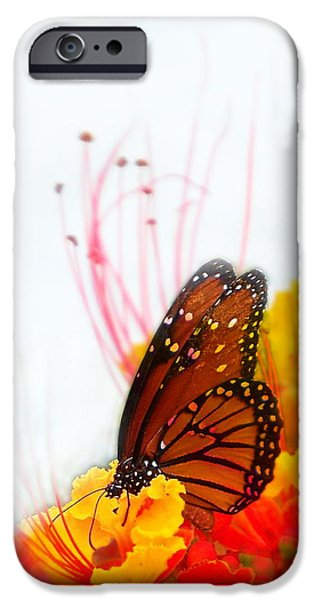 Soft Embrace iPhone Case by Kume Bryant
