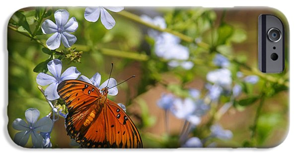 Fine Art Photo iPhone Cases - Soft Landing iPhone Case by Dan Holm