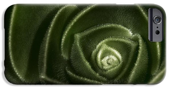 Best Sellers -  - Botanical iPhone Cases - Soft Succulent iPhone Case by Susan Candelario