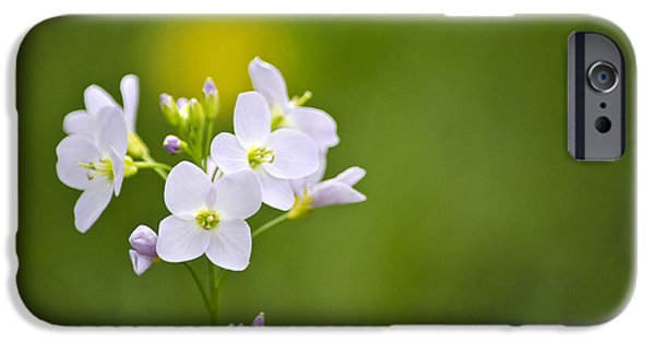 Cuckoo iPhone Cases - Soft White Cuckoo Flowers iPhone Case by Christina Rollo