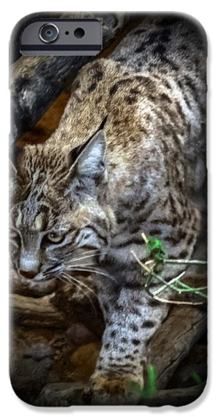 Bobcats Mixed Media iPhone Cases - Soften Bobcat iPhone Case by Elaine Malott