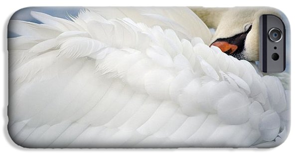 Swans... iPhone Cases - Softly Sleeping iPhone Case by Deb Halloran