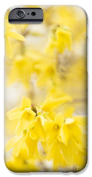 Wintertime iPhone Cases - Softly Yellow iPhone Case by Anne Gilbert