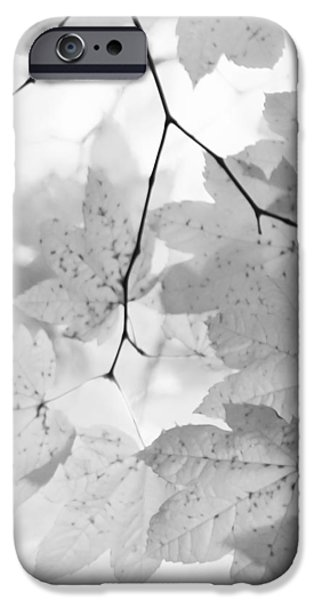 Monotone iPhone Cases - Softness of Maple Leaves Monochrome iPhone Case by Jennie Marie Schell