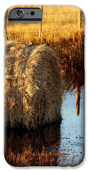 Soggy Bottom Feed iPhone Case by Kerri Huven