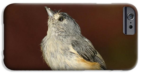 Tufted Titmouse iPhone Cases - Soggy Titmouse iPhone Case by Lara Ellis