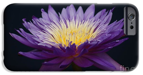 Etc. Photographs iPhone Cases - Solita side. iPhone Case by Rob Luzier